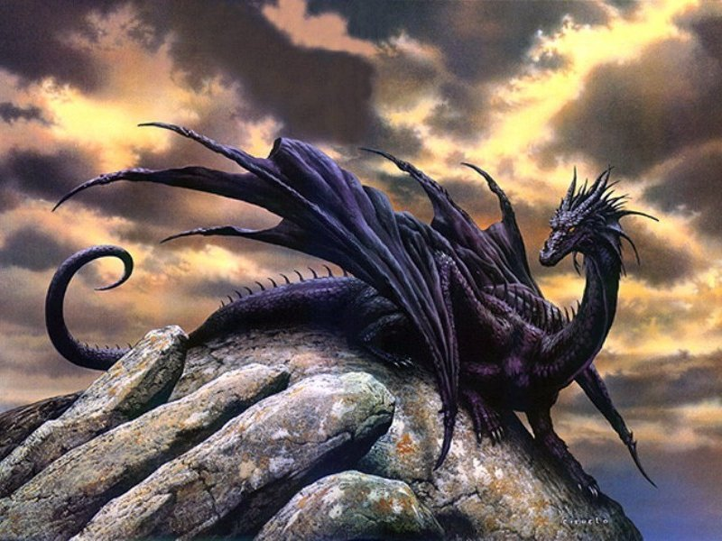 King Black Dragon Wallpaper Images & Pictures - Becuo Platinum Cross Fox