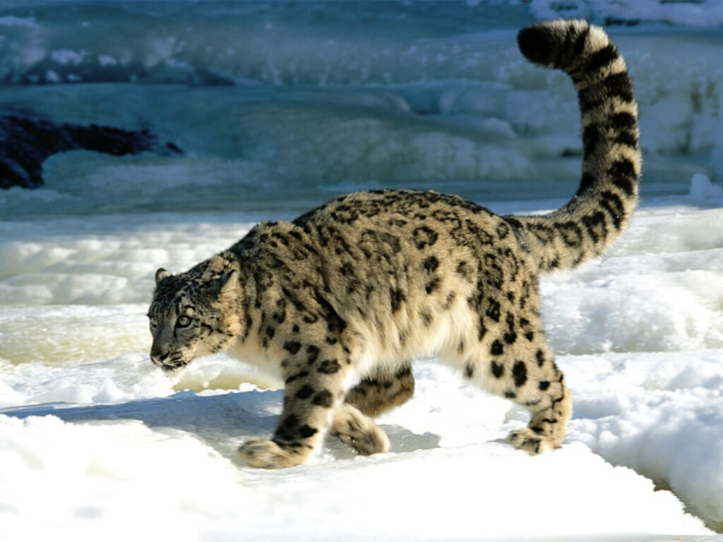 external image Calculation,%20Snow%20Leopard.jpg