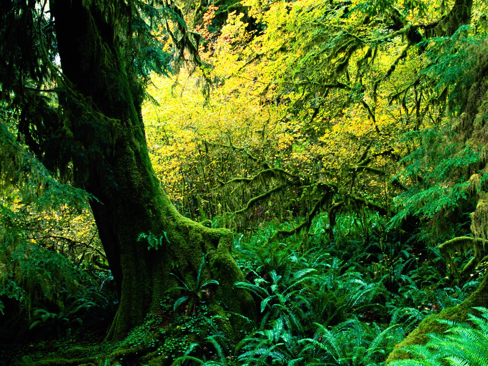 external image Hoh%20Rainforest,%20Olympic%20National%20Park,%20Washington.jpg